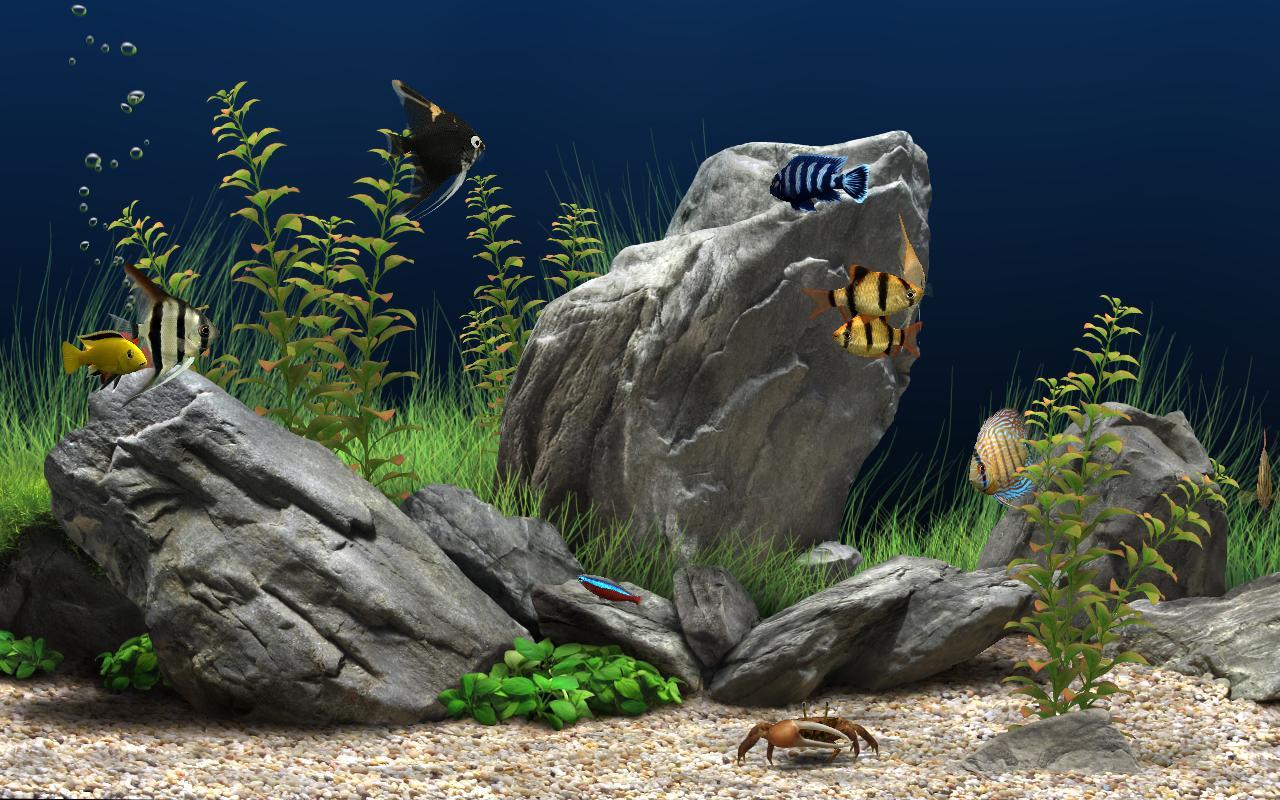 Conticasos dream aquarium screensaver vers o para - Dream aquarium virtual fishtank 1 ...