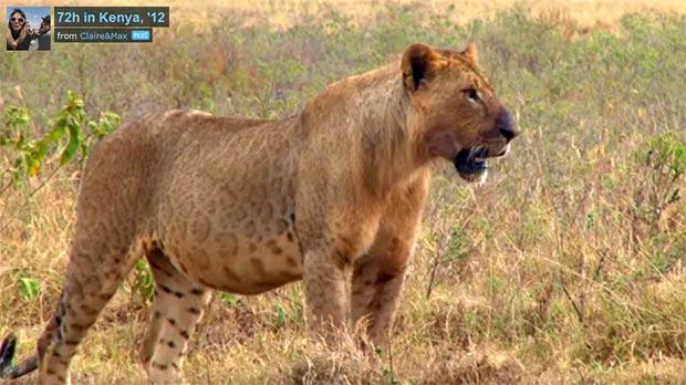 quénia áfrica safari