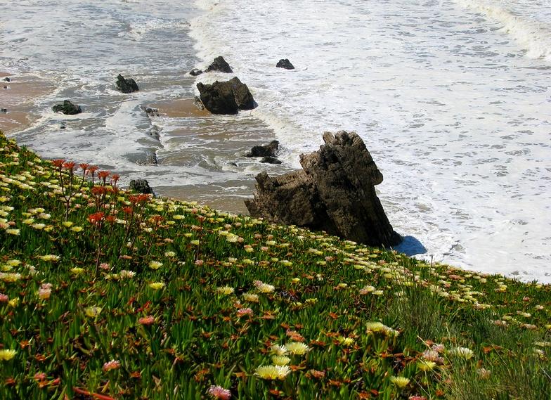 o mar em flor