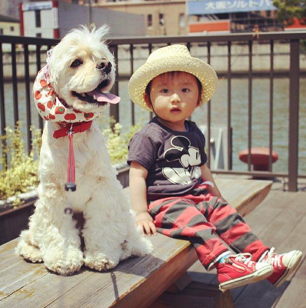 bebe japones e cão cocker spaniel