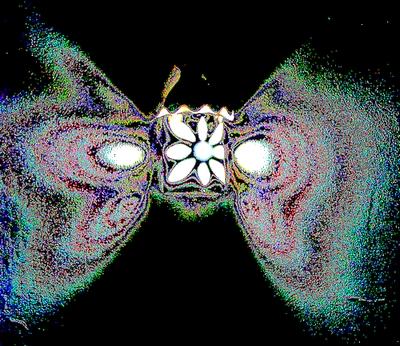 borboleta feita de luz