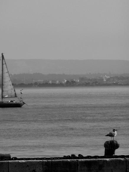 gaivota à vela