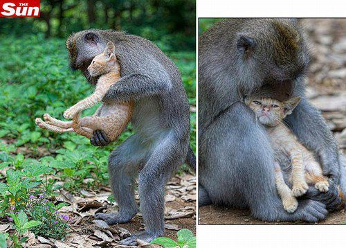gato e macaco