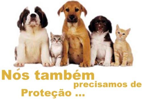 Protecção de Animais.jpg
