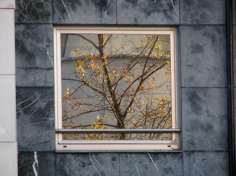 outono reflectido
