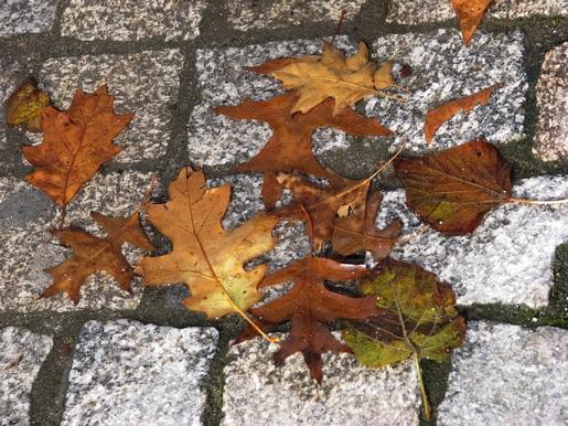 outono espalhado
