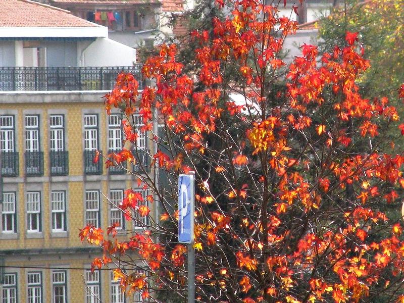 outono invicto