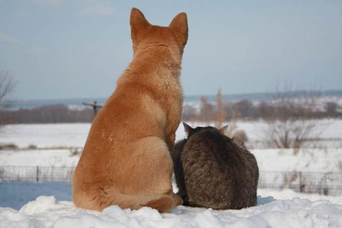amizade cão gato animais amigos inseparáveis