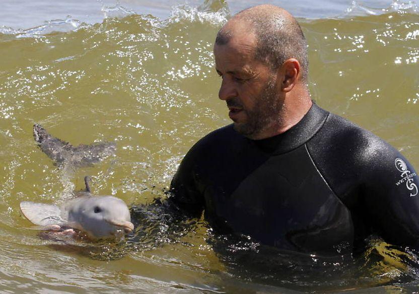 golfinho bebe