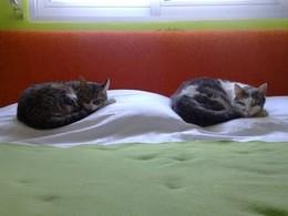 A dormirem na caminha... o que elas adoram!