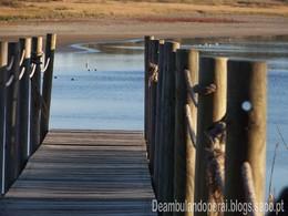 Cegonha e Pato - Lagoa da Ervedeira